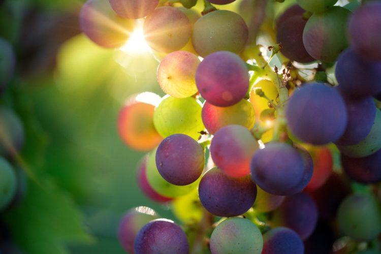 L'impact du Covid-19 sur le secteur des Vins & Spiritueux